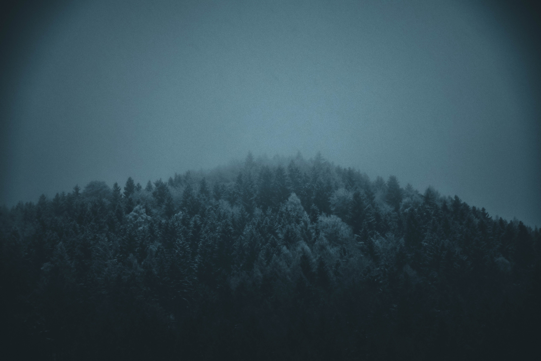 冬季, 大自然, 有霧, 森林 的 免费素材照片