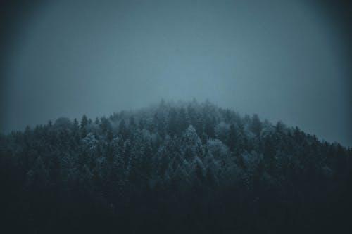 คลังภาพถ่ายฟรี ของ ต้นไม้, ป่า, มีหมอกมาก, มืด