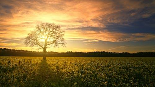 剪影, 太陽, 日出, 日落 的 免费素材照片