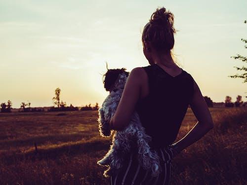 Foto d'estoc gratuïta de #gos, adequat, animal, aniversari