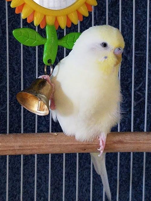 Безкоштовне стокове фото на тему «Папуга»