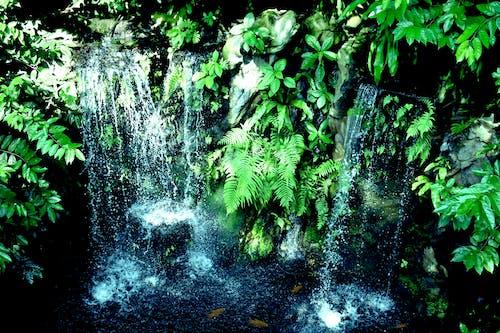 Бесплатное стоковое фото с водопад, зеленый, зоопарк, красота