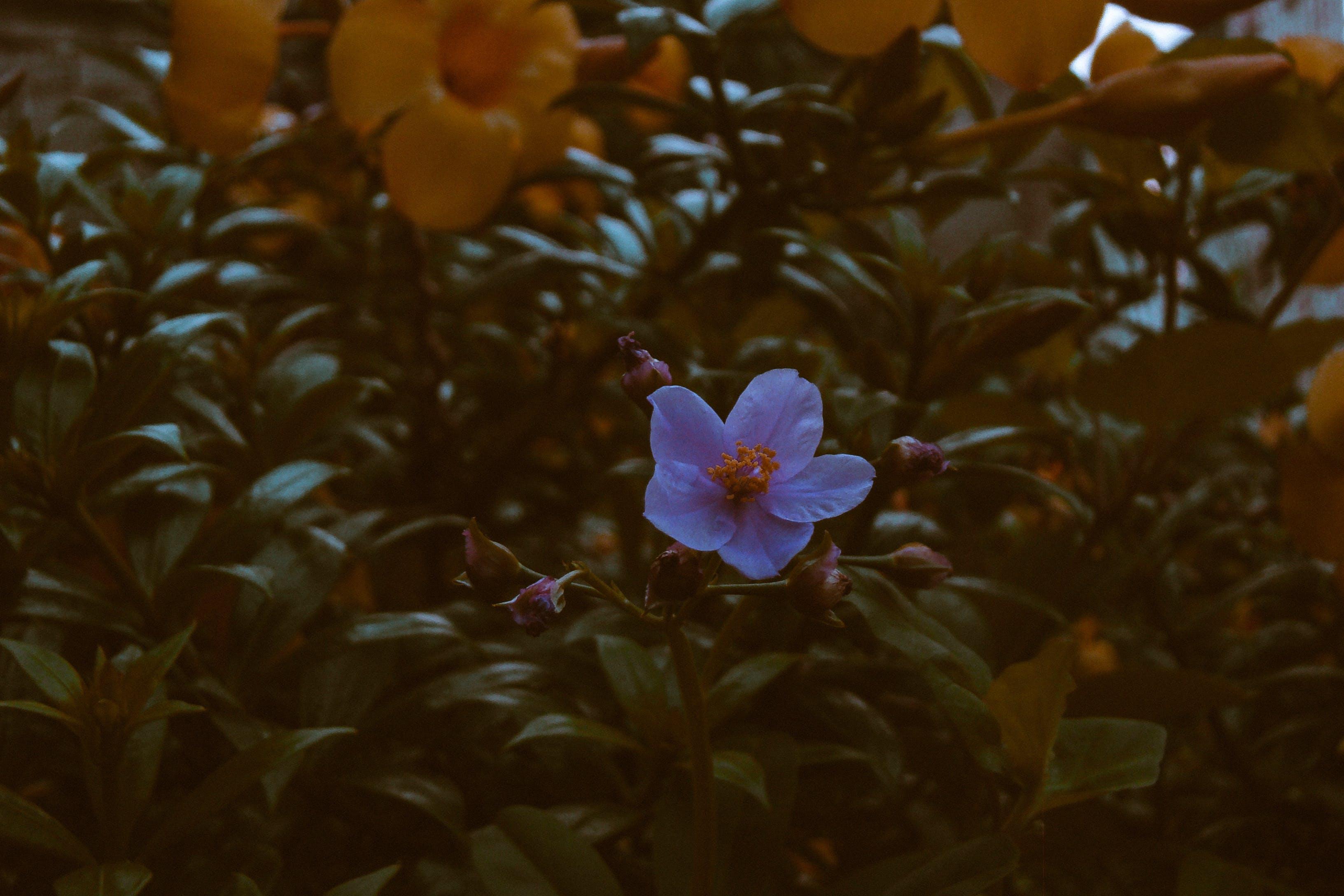 Foto d'estoc gratuïta de flor, flors boniques, flors grogues, fotografia