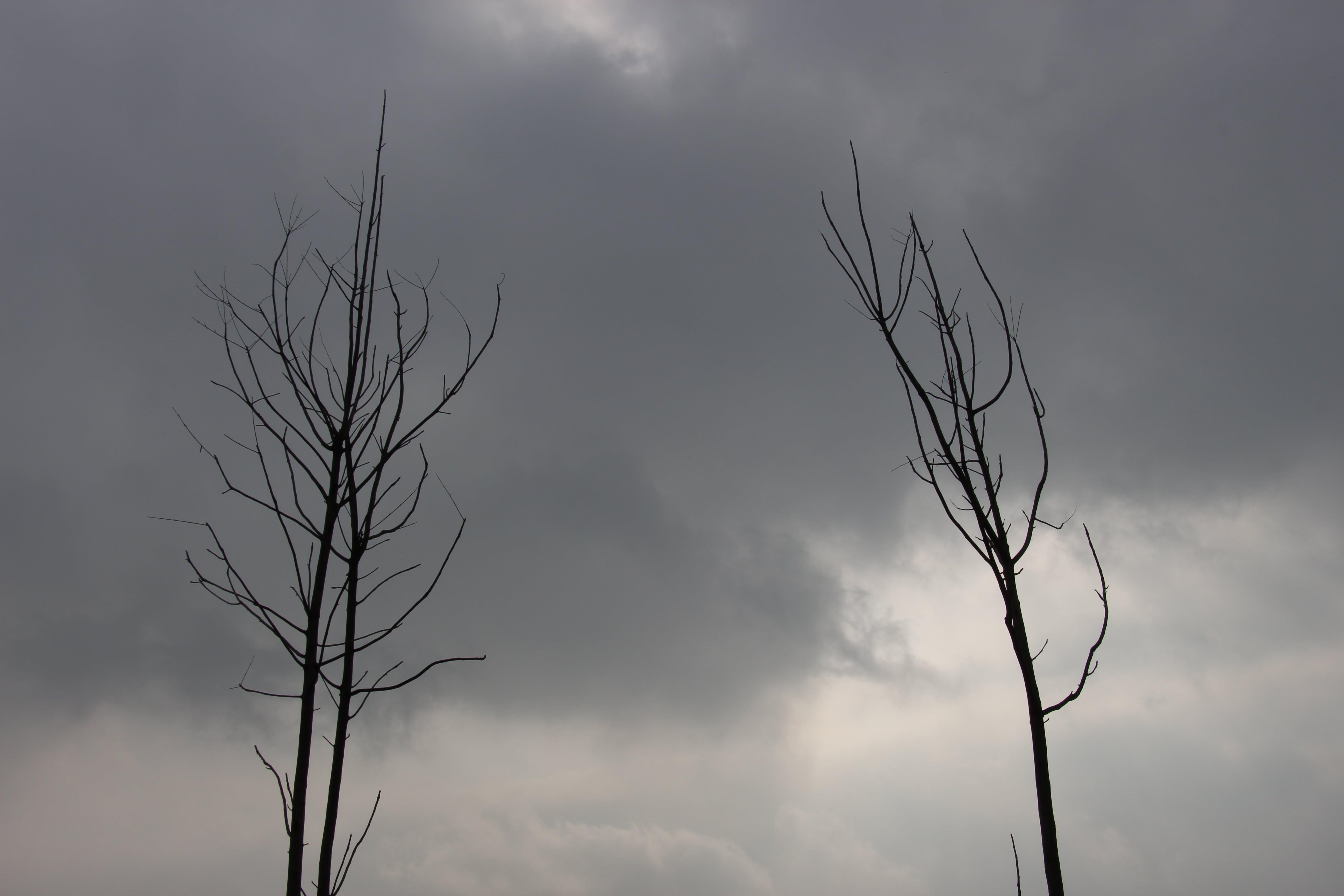 Free stock photo of Dark Sky, #Tree, black sky