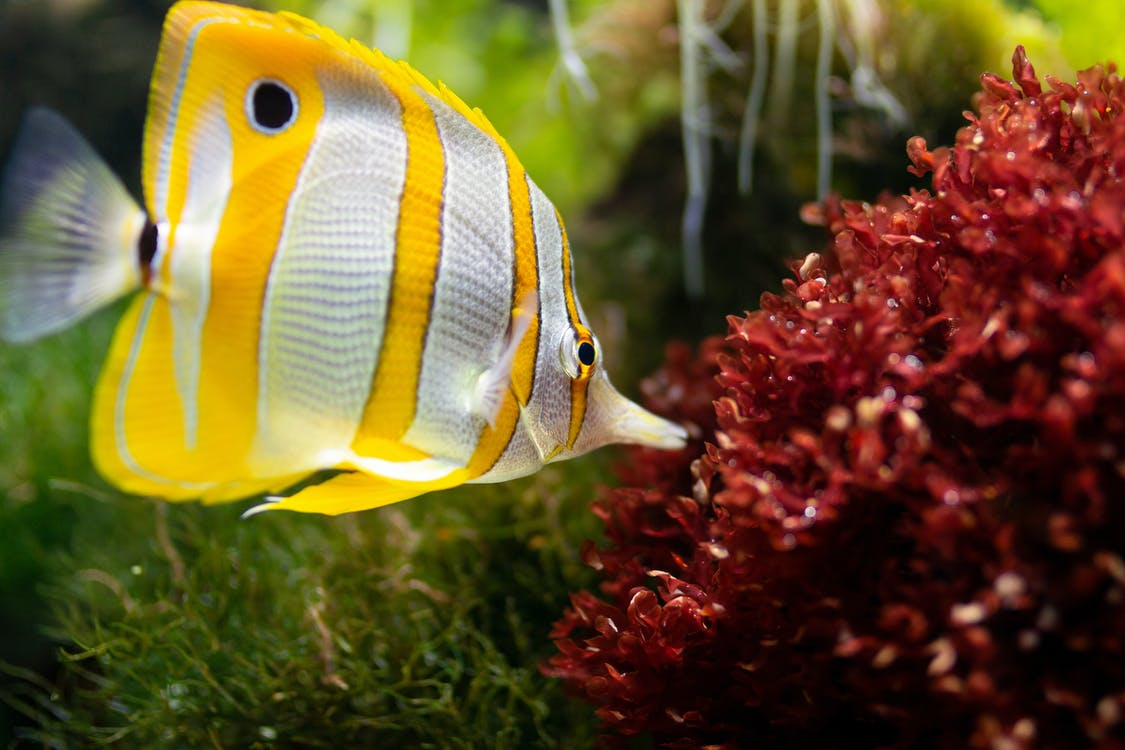 Yellow and White Fish