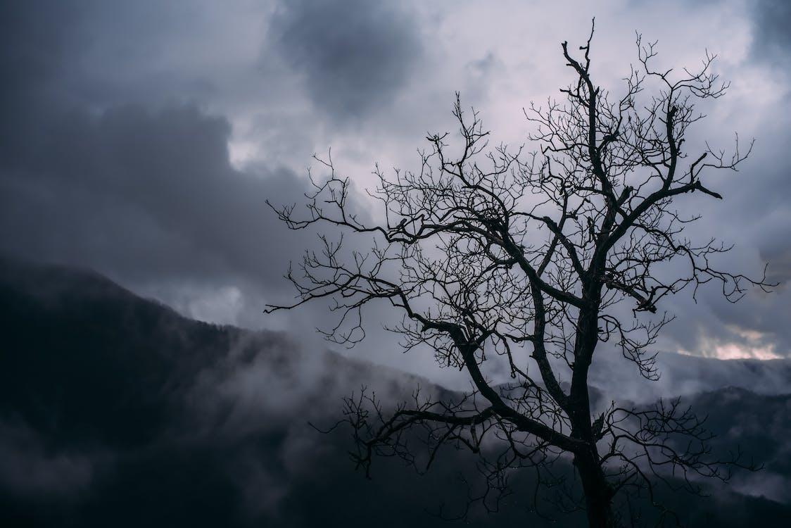 ตะวันลับฟ้า, ต้นไม้, ท้องฟ้า