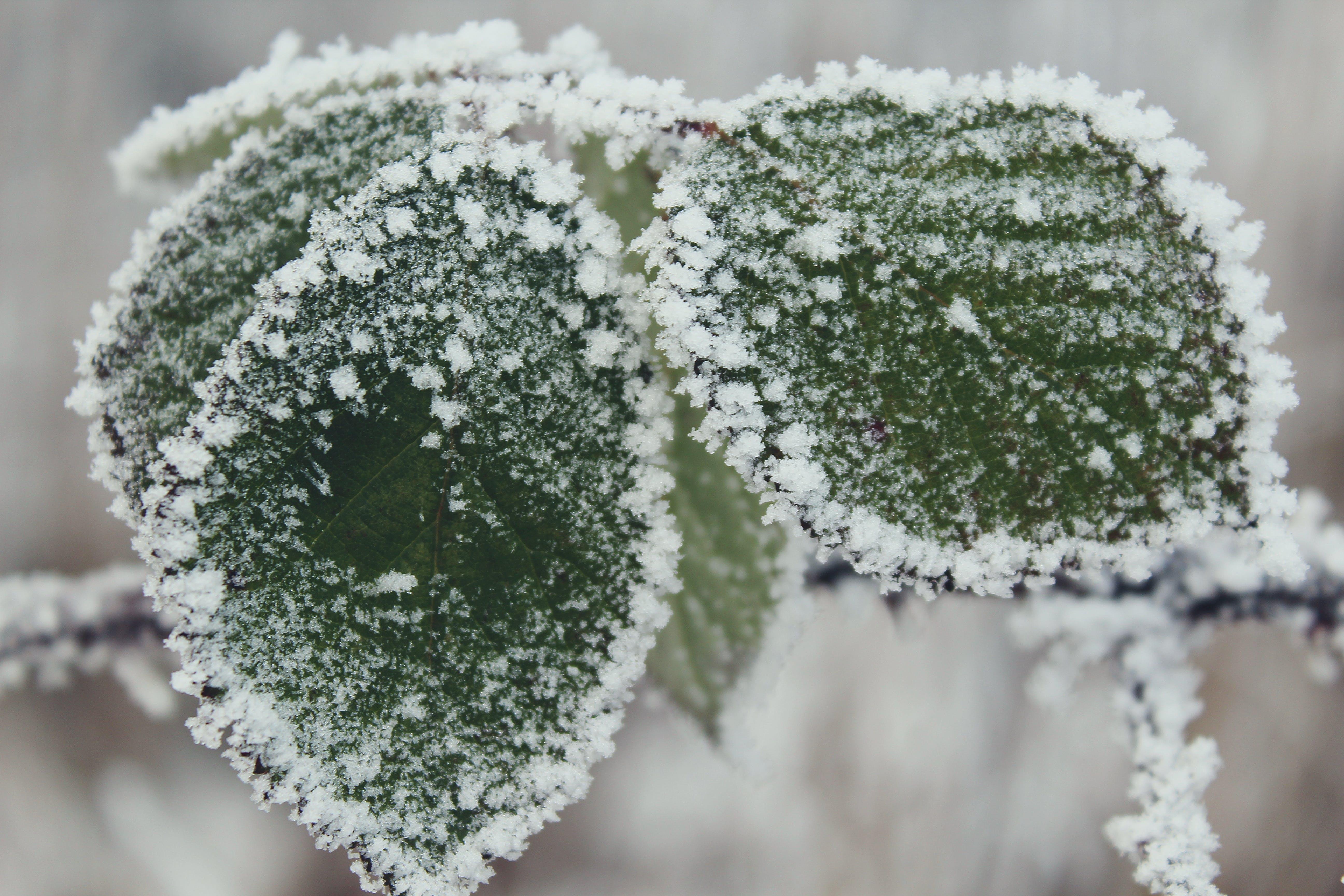 grüne pflanze, kalt, natur