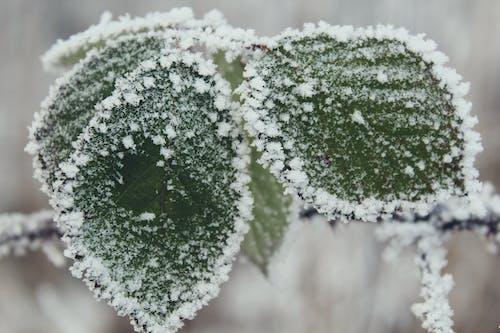 Kostenloses Stock Foto zu kalt, natur, winter