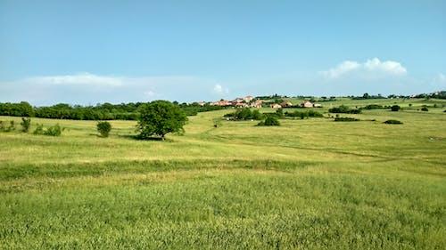 Бесплатное стоковое фото с деревня, дома, замечательный, поле