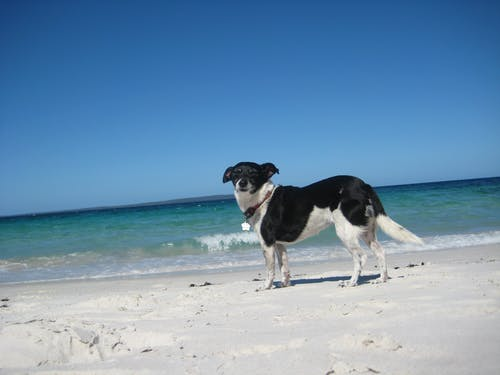 Free stock photo of happy dog on beach