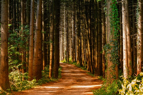 Kostnadsfri bild av ljus, löv, skog, skogsväg