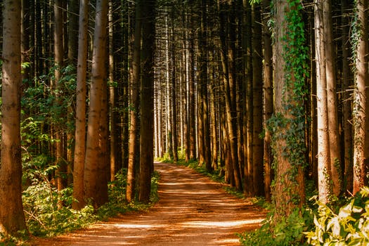 1000 Interesting Forest Path Photos 183 Pexels 183 Free Stock