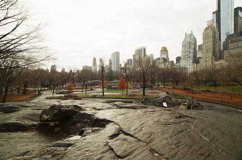 Free stock photo of 35mm, analog, analog camera, central park