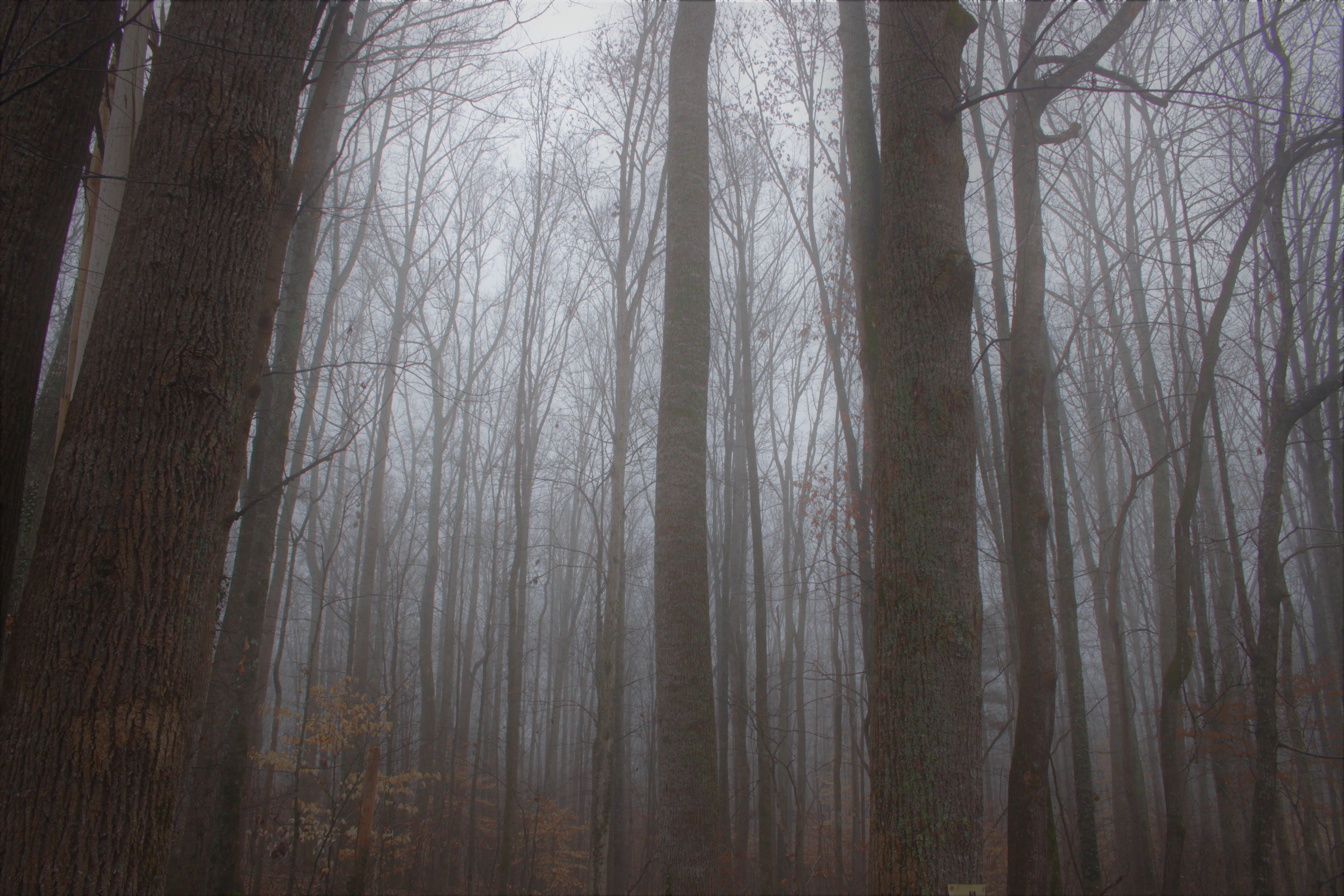 Kostenloses Stock Foto zu bäume, dunkelheit, düster, natur