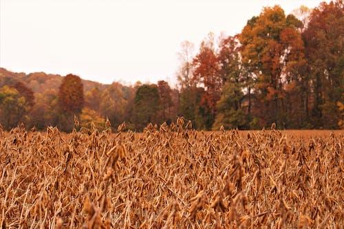 Gratis stockfoto met herfstkleuren, natuur, sportveld