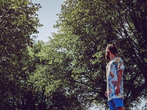 Foto d'estoc gratuïta de #ocells, #woods, adequat, arbres