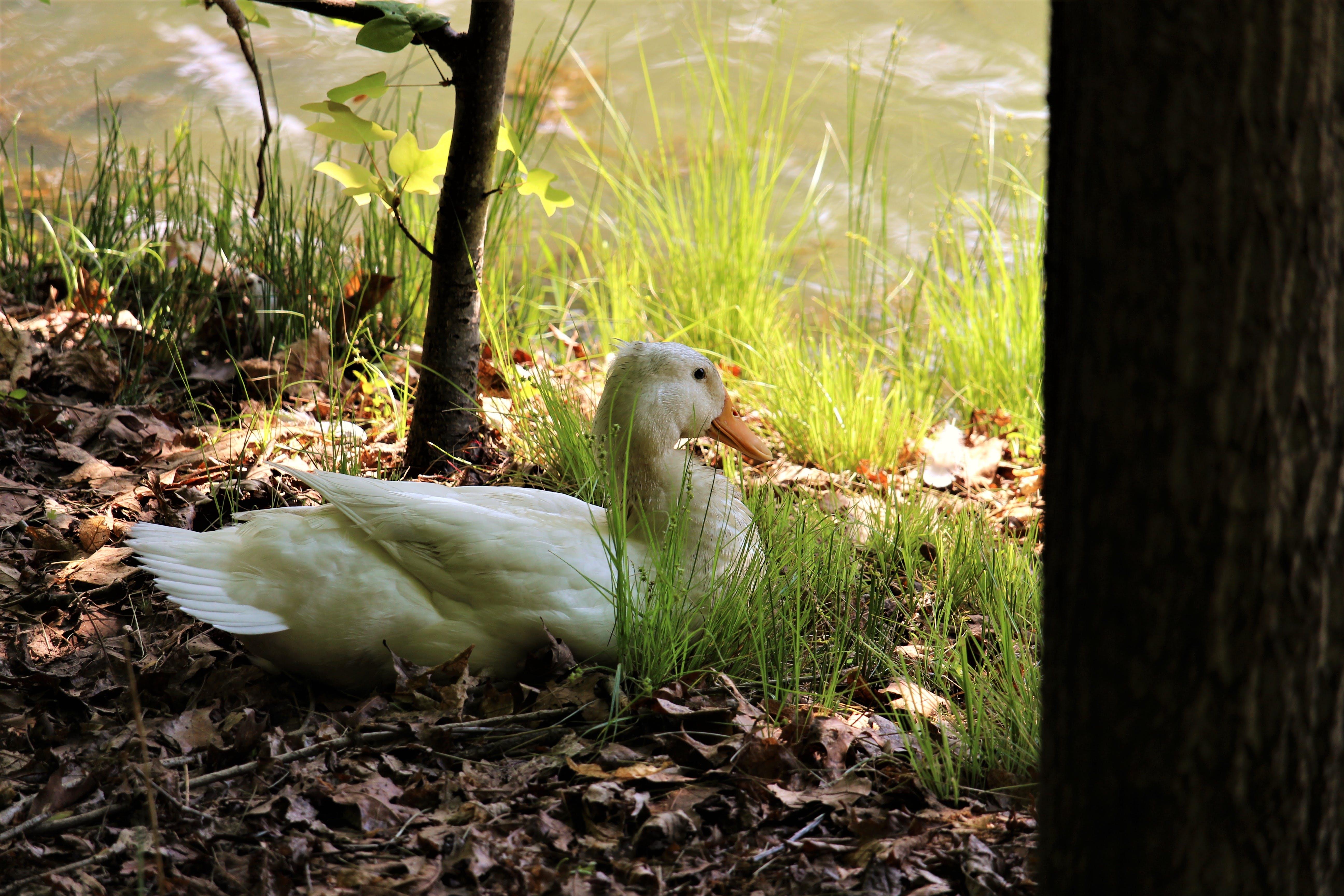 Δωρεάν στοκ φωτογραφιών με απόχρωση, ζώα, λιμνούλα, φύση