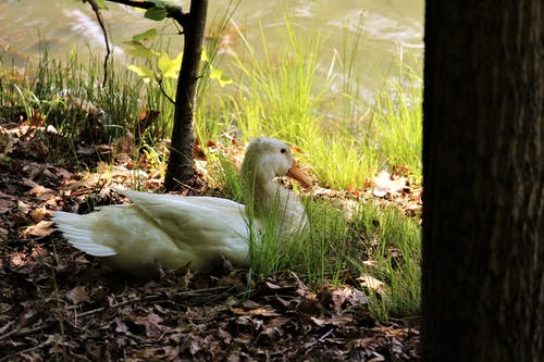Gratis stockfoto met beesten, licht en schaduw, natuur, schaduw