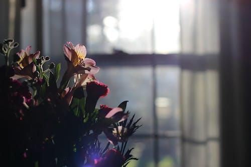 Gratis stockfoto met bloemen, Bloemenboeket, boeket, landhuis
