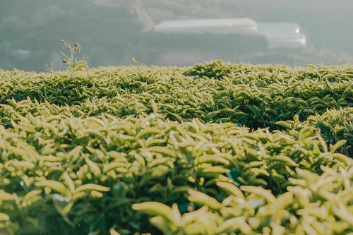 Základová fotografie zdarma na téma farma, hřiště, orná půda, plodina