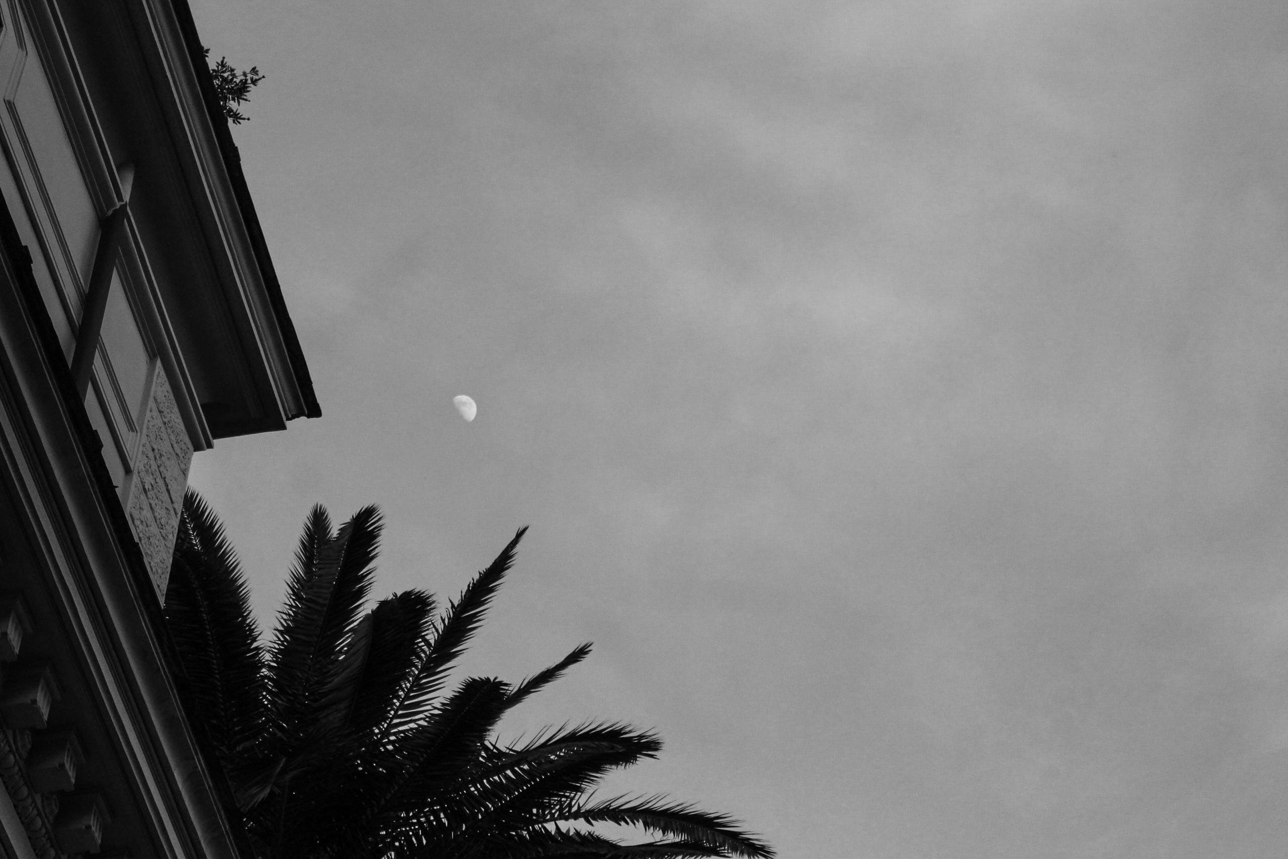 Free stock photo of architecture, moon, black and white
