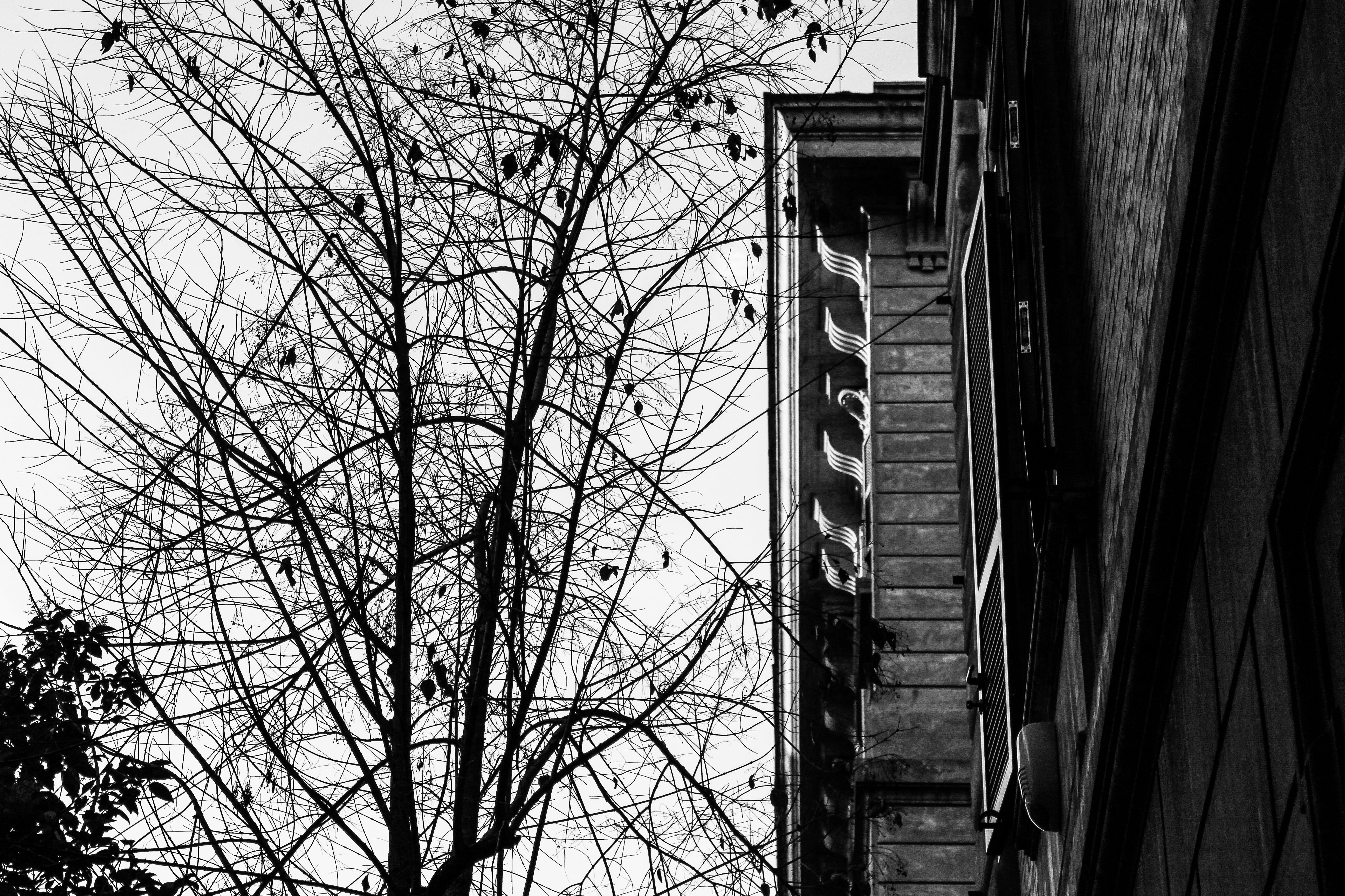 Free stock photo of architecture, tree, black and white