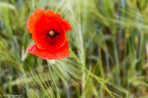 คลังภาพถ่ายฟรี ของ ดอกไม้, ธรรมชาติ