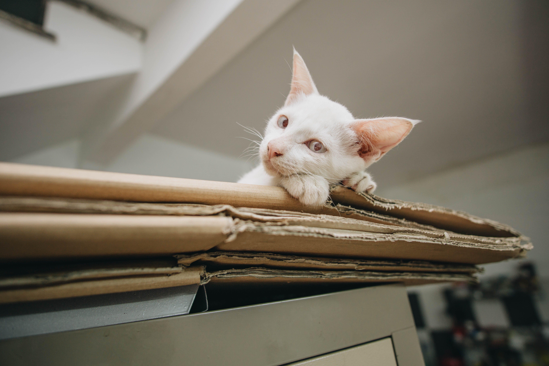 White Kitten on Brown Folded Cardboard Box