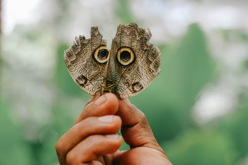 Free stock photo of animal, butterflies, butterfly
