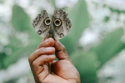 Immagine gratuita di farfalla, mariposa
