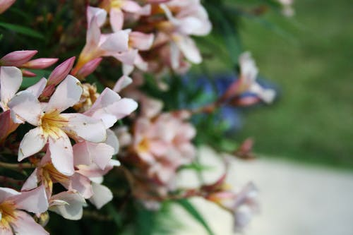 Immagine gratuita di fiori