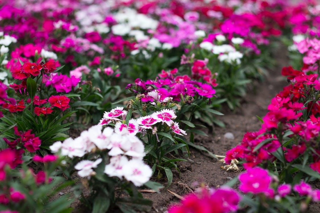 floración, flores, flores bonitas
