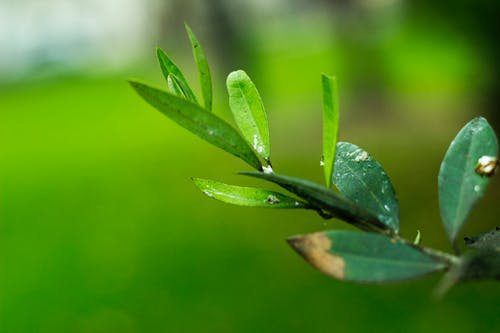 Immagine gratuita di fiore, natura, verde