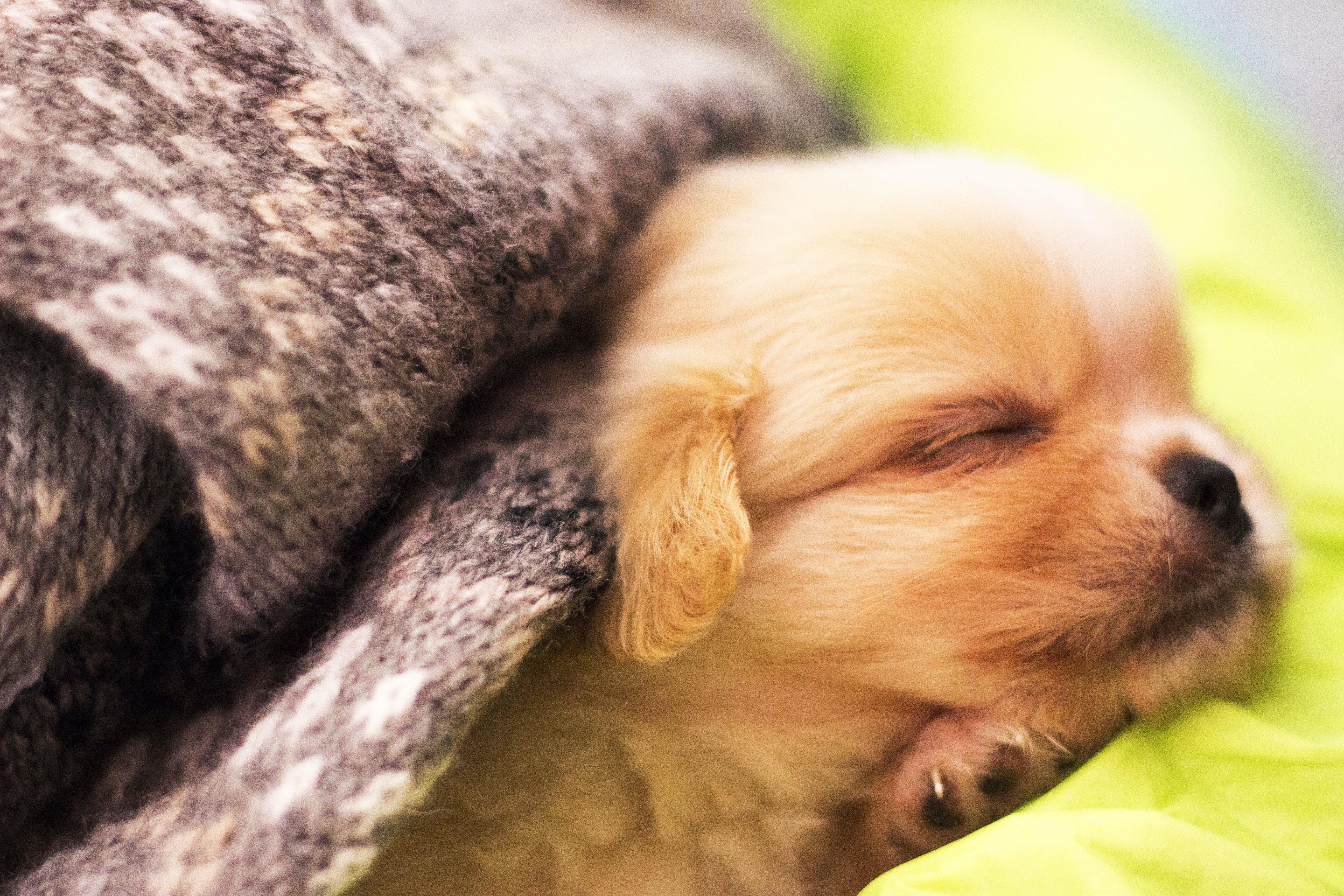 Free stock photo of baby dog, dog, pets