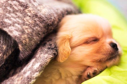bebek köpek, Evcil Hayvanlar, köpek içeren Ücretsiz stok fotoğraf