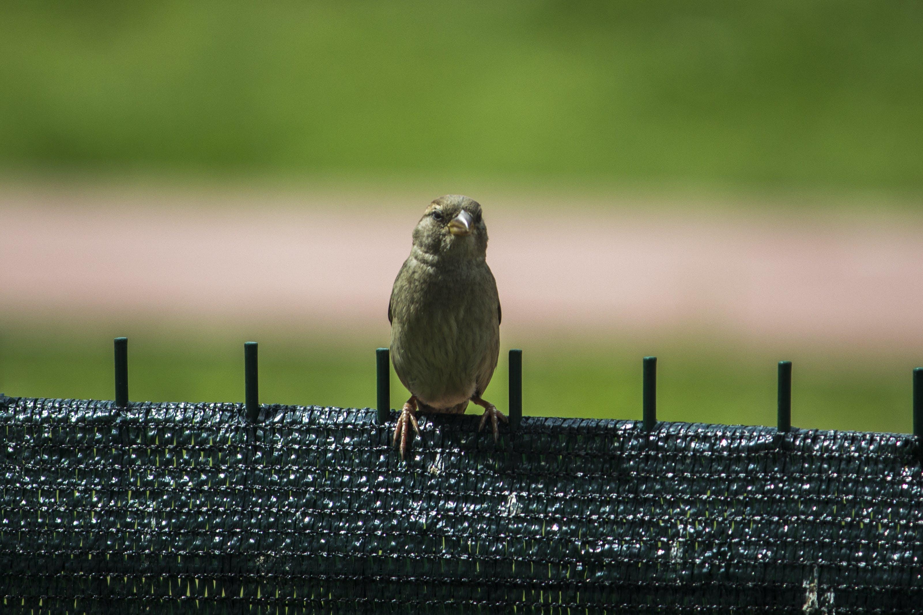 Free stock photo of animals, eye, nature, wings