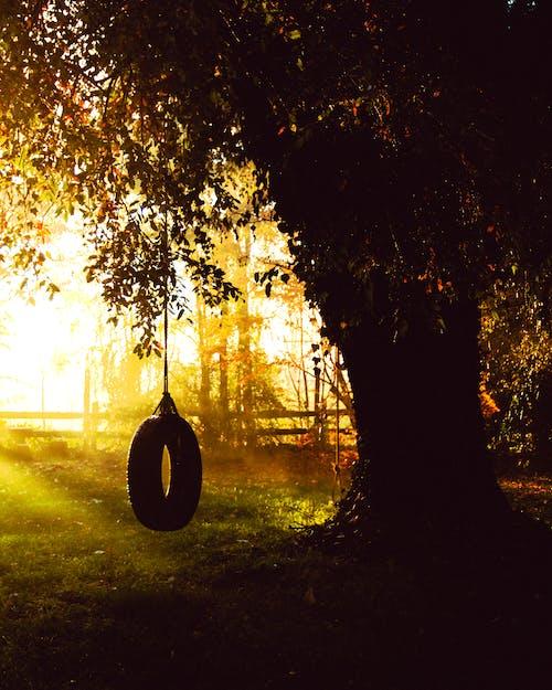 Ảnh lưu trữ miễn phí về bánh xe, cây, Hoàng hôn, vườn