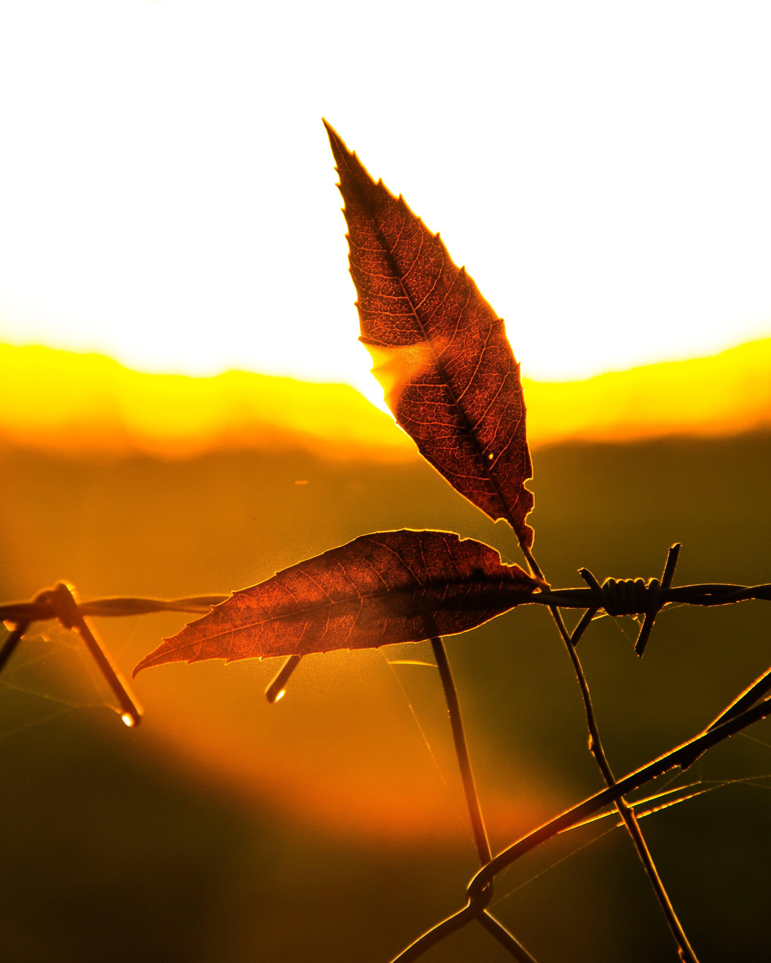 Free stock photo of autumn, leaf, orange, sun