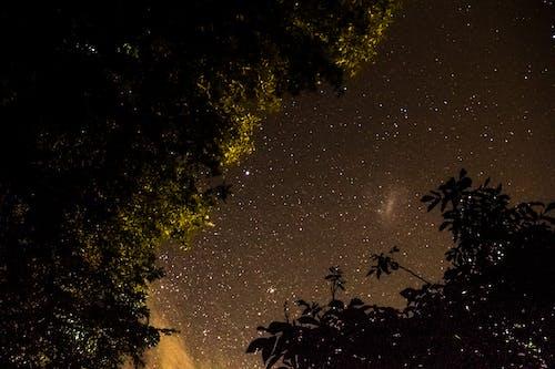 Ảnh lưu trữ miễn phí về bầu trời, cây, sao, Thiên hà