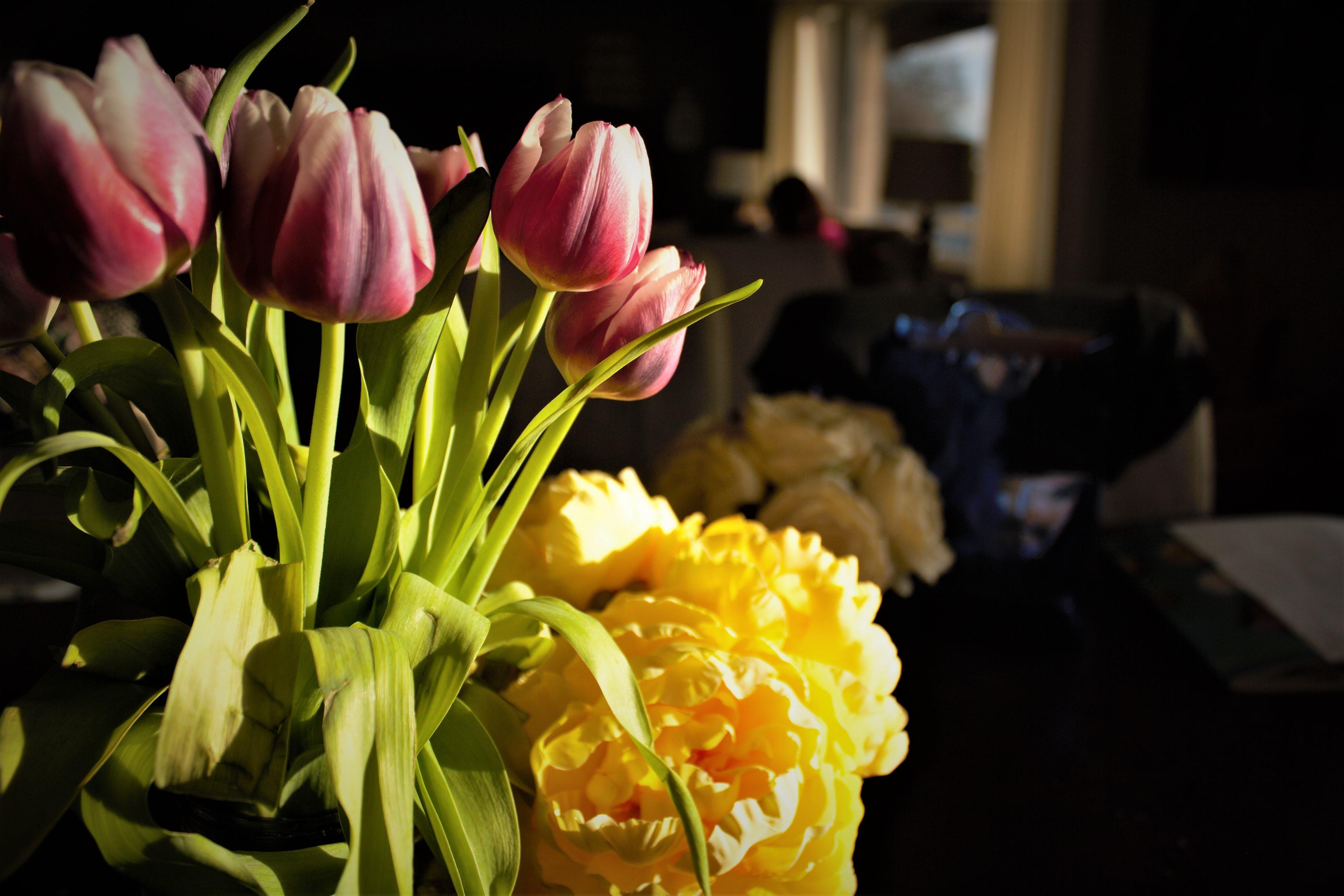 Free stock photo of flowers, fresh flowers, Market Flowers, Market Fresh