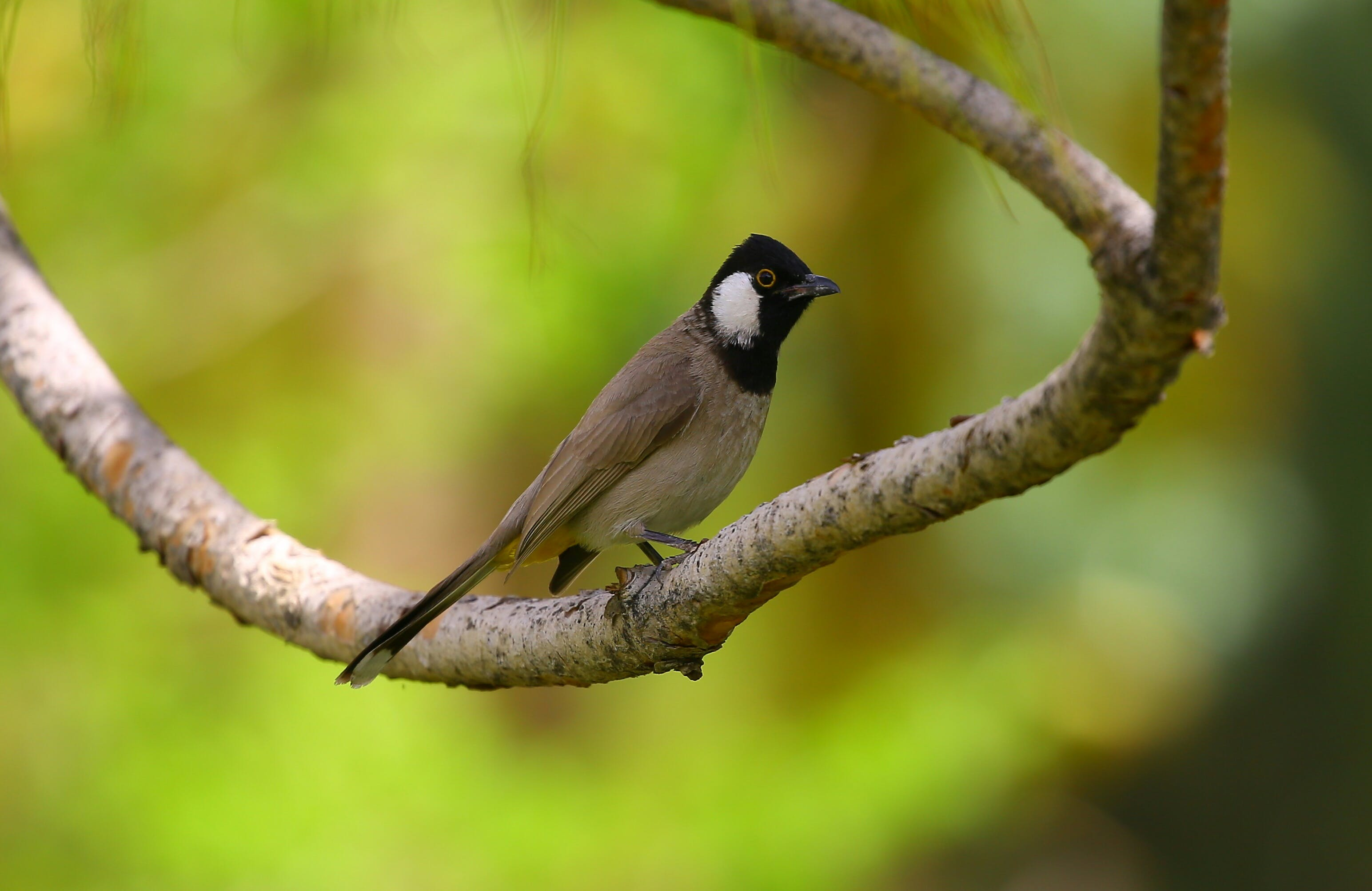 Brown and Black Bird on Tree Trunk