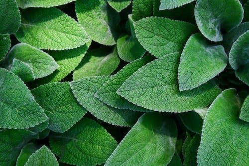 Gratis stockfoto met botanisch, botanische tuin, close-up, detailopname