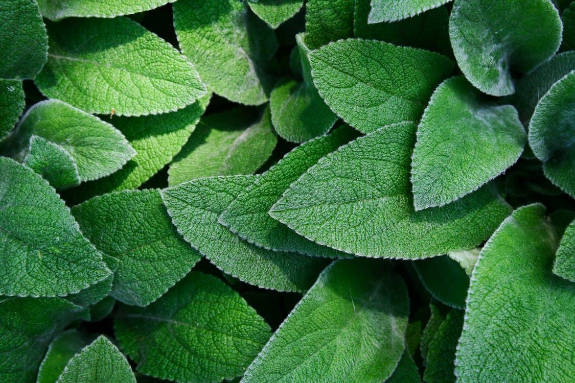 botanisch, botanische tuin, close-up