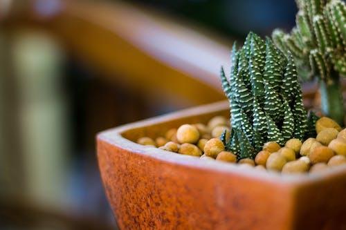 Бесплатное стоковое фото с ботанический сад, зеленый, кактус, обои hd