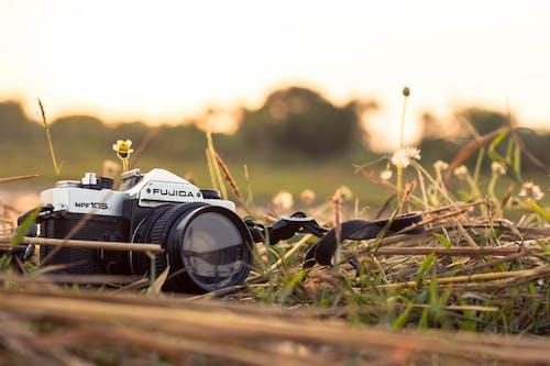 건초, 경치, 경치가 좋은, 꽃의 무료 스톡 사진