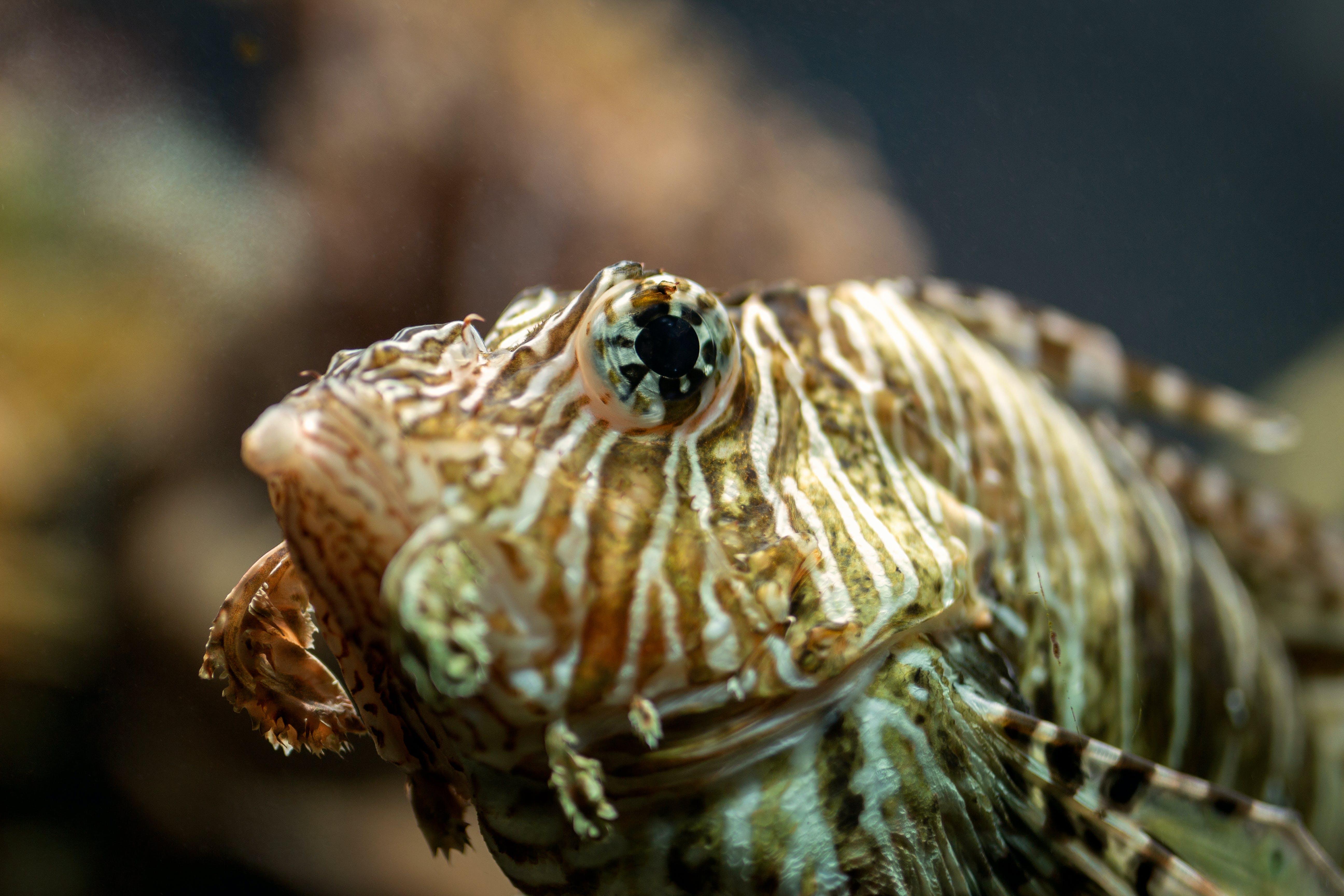Free stock photo of aquarium, deep ocean, fish, fishing