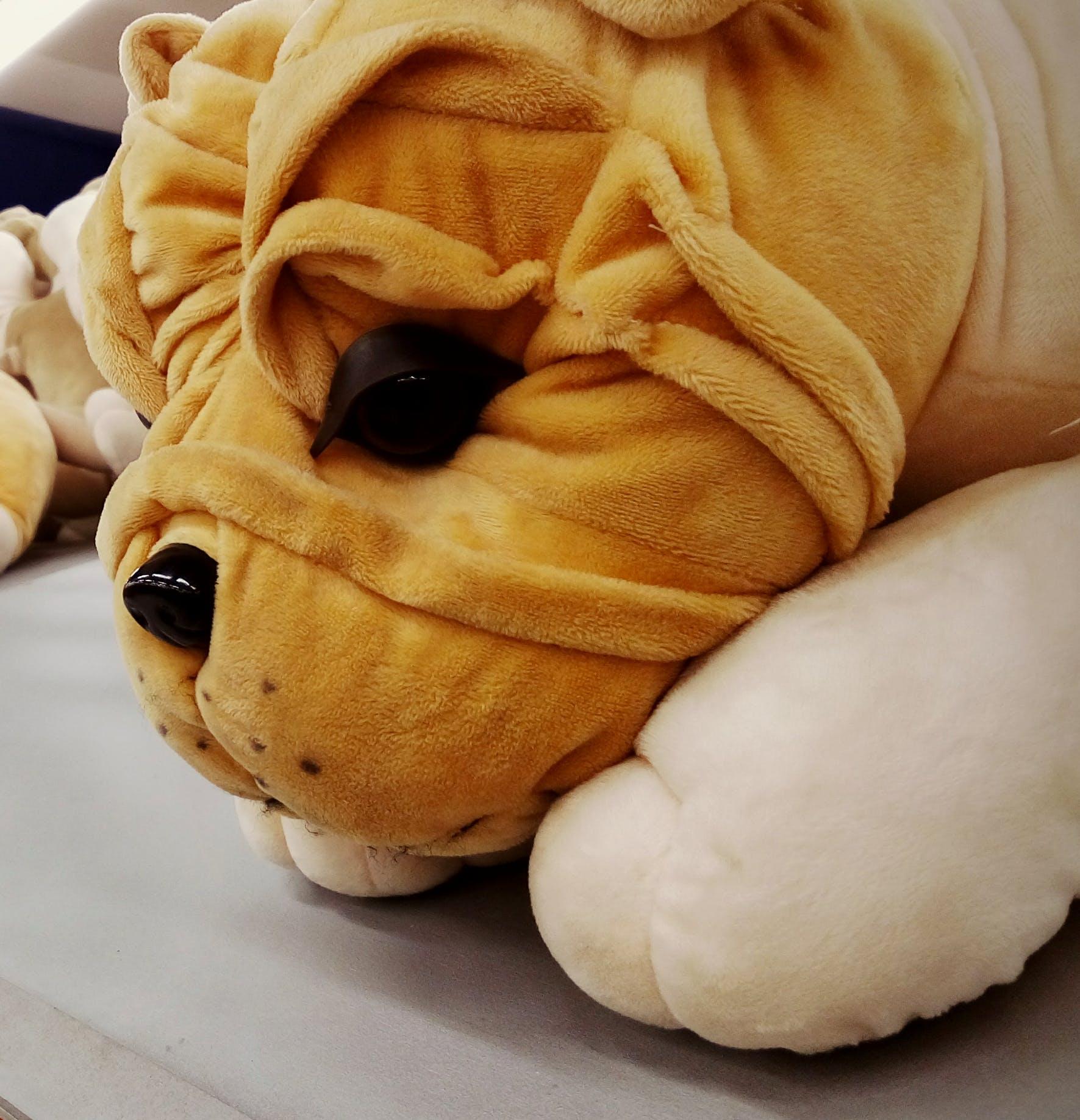 Δωρεάν στοκ φωτογραφιών με #toy #puppy