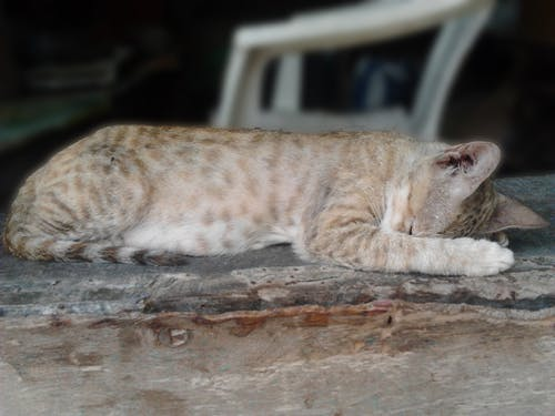 Free stock photo of animal, cat, cute animal, cute sleepy cat