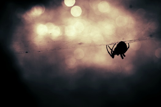 Free stock photo of animal, silhouette, bokeh, insect