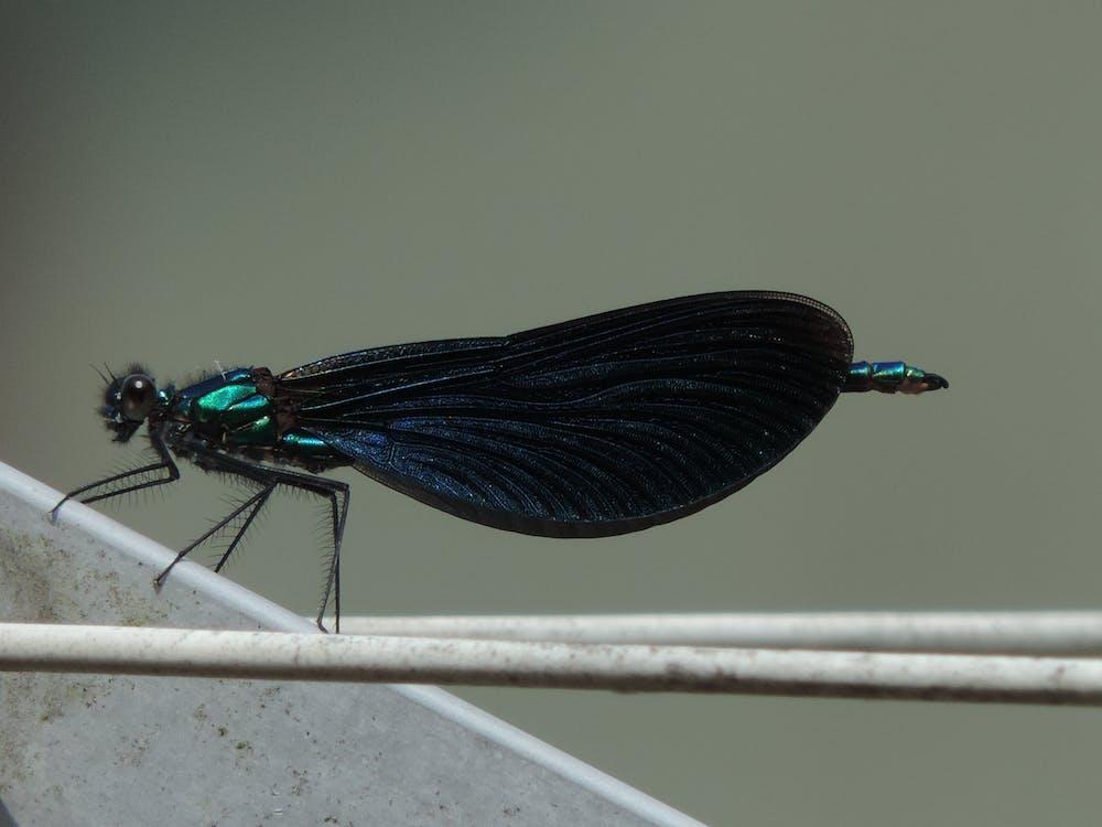 böcek, kara, mavi